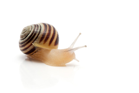slithery: snail on a white background. macro