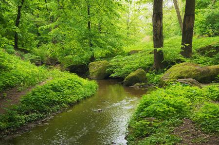 River in the wood Banco de Imagens