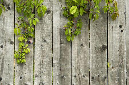 barnwood: Valla de madera
