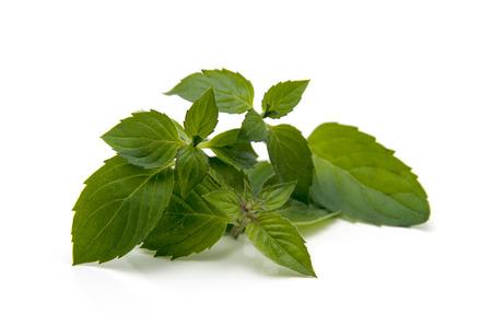 hierba buena: menta