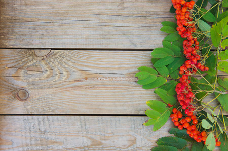 ashberry: ashberry on wooden background Stock Photo