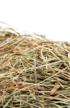 elusive: Needle in a haystack on white.