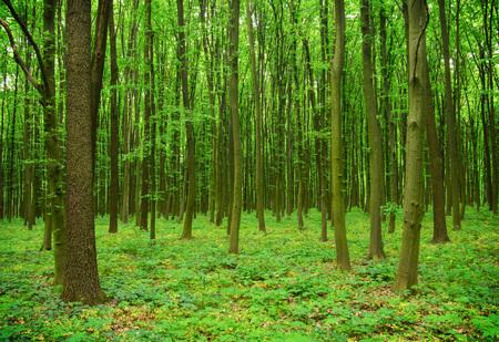 forest in spring Banco de Imagens