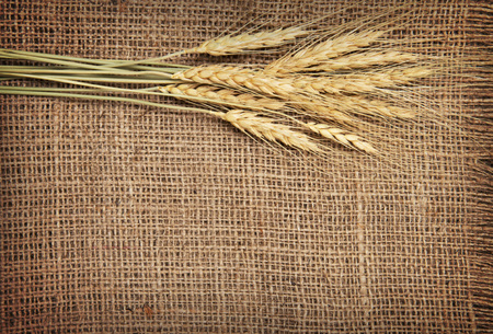 countryside background: Wheat ears border on burlap background Stock Photo