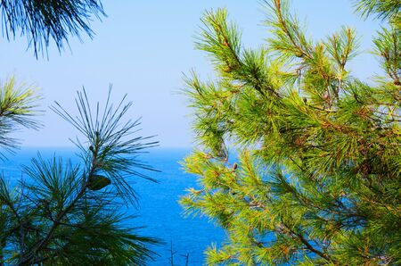ocean and sea: Pine tree branches with turquoise sea background, mediterranean nature Stock Photo