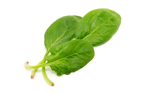 Spinach on a white background Banco de Imagens - 46379108