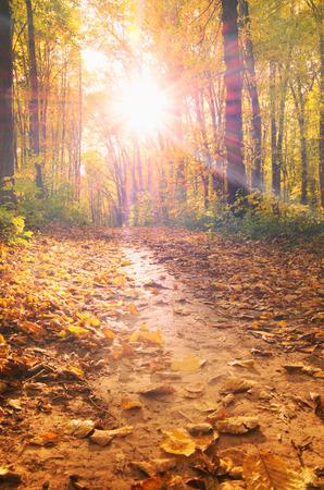 feuille arbre: Lever de soleil dans la forêt d'automne Banque d'images
