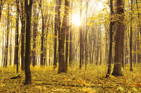 countryside landscape: Beautiful golden autumn landscape Stock Photo