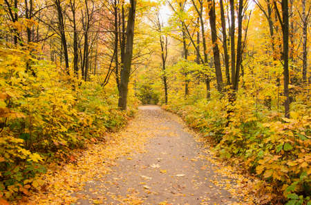 pathway: Pathway through the autumn forest