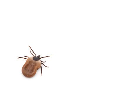 lurk: health danger - disease-carrier ticks