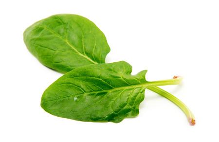 spinach: Espinaca en un fondo blanco