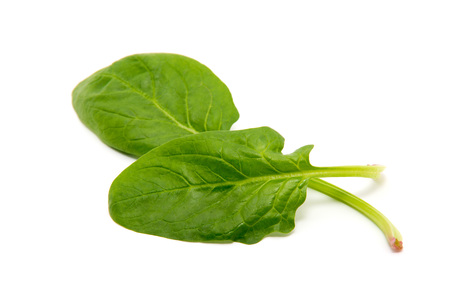 fresh spinach: Spinach on a white background