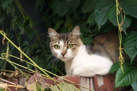 frisky: cat