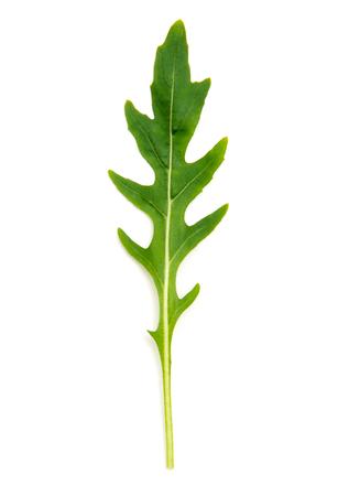 rukola: Green arugula leaf isolated on white Stock Photo