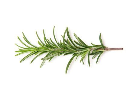 twig: Twig of rosemary on a white background