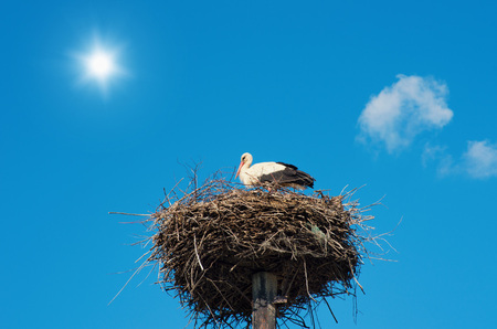 birds in a tree: Stork in its nest. Stock Photo