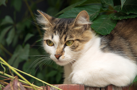 patchy: Street cat who saw a man suddenly