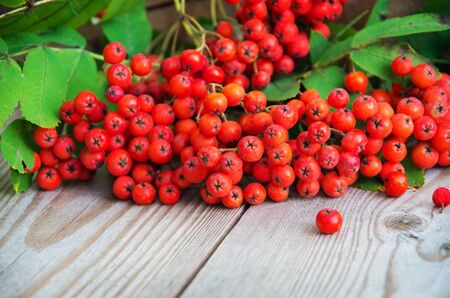 sorb: ashberry on wooden background Stock Photo
