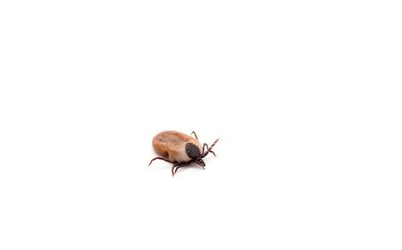 malfunction: health danger - disease-carrier ticks