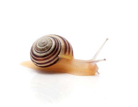 snail on a white background. macro