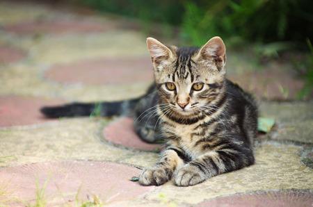 gray cat: Gray kitten on the street