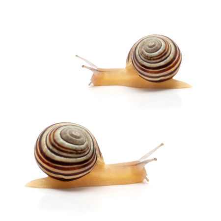 snail on a white background. macro Imagens - 114199301