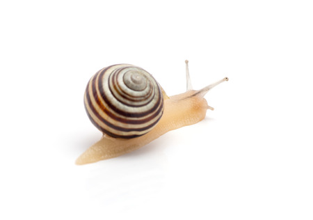 snail on a white background. macro