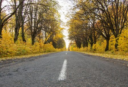 Road in the autumnal forest Banco de Imagens