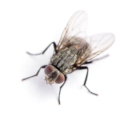 fly isolated on a white Stock fotó