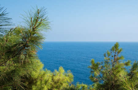 Pine tree branches with turquoise sea background, mediterranean nature Zdjęcie Seryjne