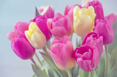 Mix of tulips flowers