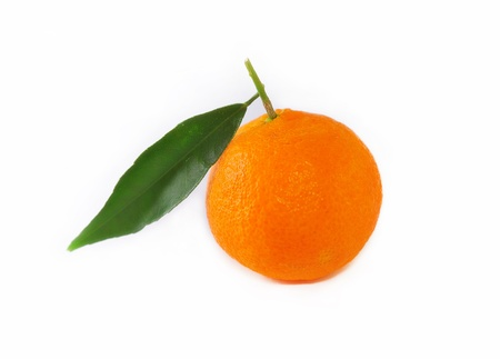 Ripe tangerine with leaf on  branch.