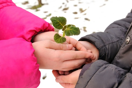Hands of boy and girl keep green sprig  Stock Photo