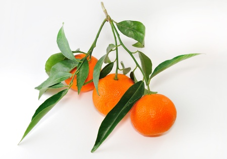 Three ripe tangerine on  twig with leaves