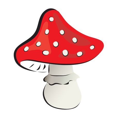 Red fly agaric mushroom on white background.