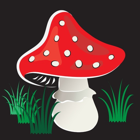 Amanita mushroom in  grass on  black background.