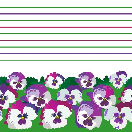 Background violet pansies. Vector