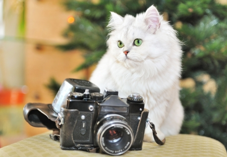 White cat sitting on a chair next to the camera.