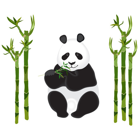Panda with a sprig of bamboo on white. Bamboo stalks. Vector illustration. Vector