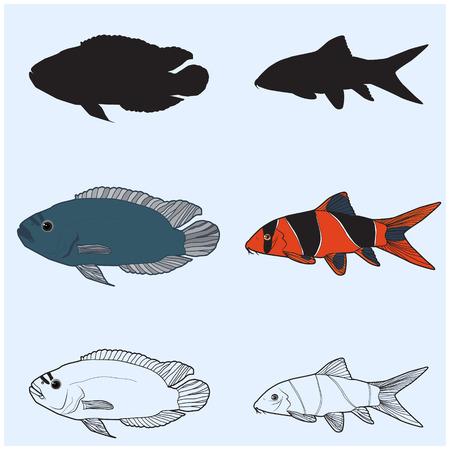 sunfish: The contours of aquarium fish.Chromobotia macracanthus, Botia macracanthus, Clown Loach.Cichlidae