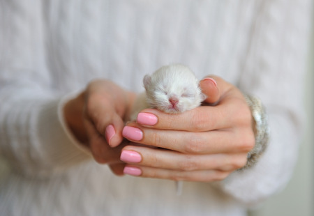 kitten: Very little kitten with eyes closed in female hands. Stock Photo