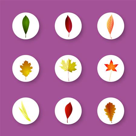 chokeberry: Autumn leaves set, isolated on lilac  background. Cartoon flat style, vector illustration. Illustration
