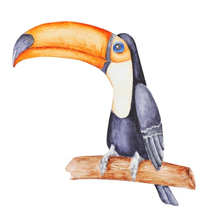 Cute tropical tucan sitting on the  branch  . Hand panted waterc