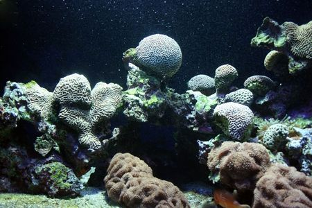 seem: Underwater corals seem extraterrestrial or future landscape