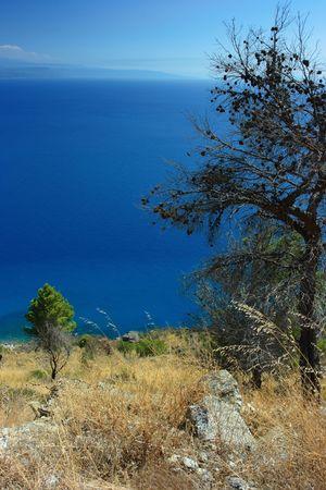 torrid: Torrid flora against deep blue sea