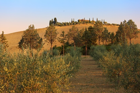 Sunrise in Val dOrcia, view on a typical agricultural hill with villa and field photo