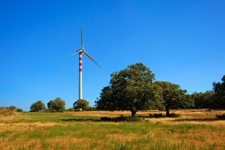 turbin: Wind turbins producing aeolian energy under blue sky on a green field with chestnut trees in Calabria