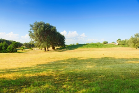 Golf course of green-yellow color with olive trees in sunny day photo