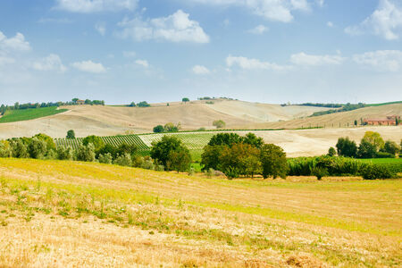 val dorcia: Summer landscape of fields and farm in Val dOrcia, Tuscany