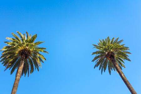 Vintage Rodeo Drive Beverly Hills Palm Trees Los Angeles California against blue sky